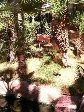 Flamingo Las Vegas Hotel & Casino : Flamingos.