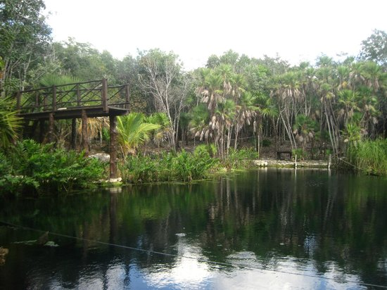 Cenote Crystal: Сenote Crystal