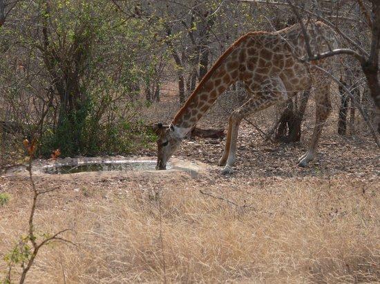 Tsakane Safari Camp: View from my hut