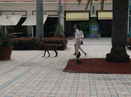 Mizner Park: Ladies walking pampered pooch