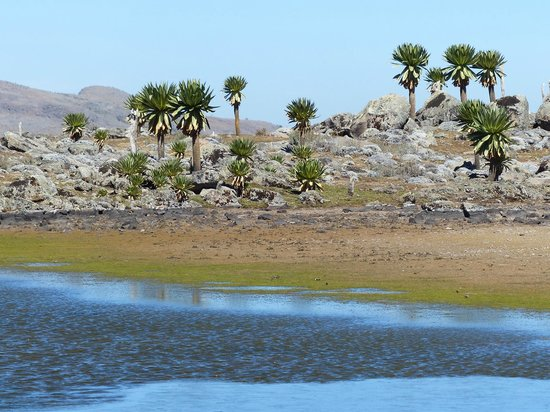 Lake, Bale Mountains