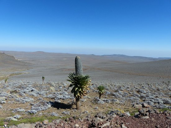 Plateau, Bale Mountains, Ethiopia