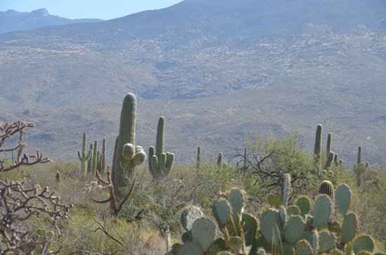 Rincon Mountain Visitor Center: cactus and mountains