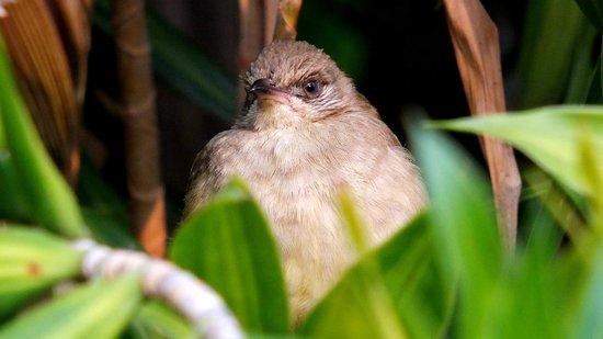 Centara Grand Beach Resort & Villas Hua Hin: Wildlife in the garden