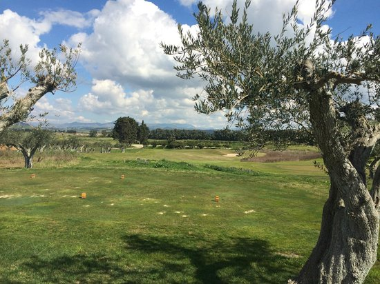Verdura Resort: short course with olive trees