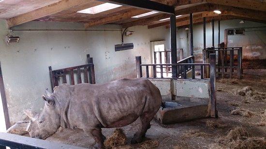 Marwell Zoo: love this guy amazing animal