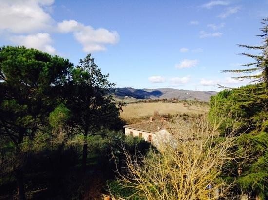 Castellare De' Noveschi: tra vigneti e ulivi