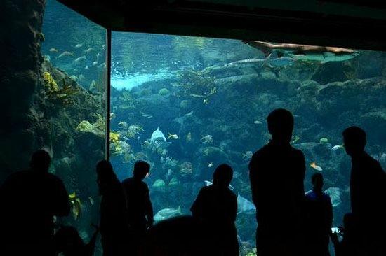 Four Points by Sheraton Suites Tampa Airport Westshore : Tampa aquarium