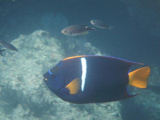 Eco Adventures Cabo Pulmo Snorkeling trip
