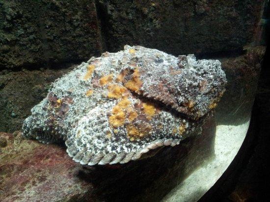 Blue Planet Aquarium: Stone fish
