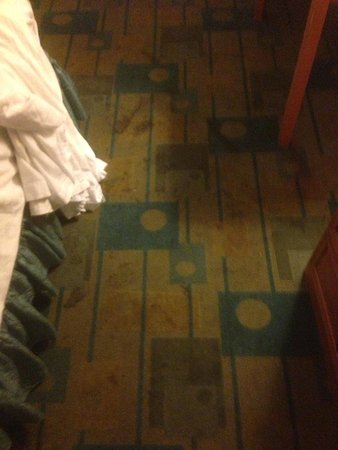 Stay Express Inn Dallas - Fair Park / Downtown : Stains in carpet sick just sick!!!!