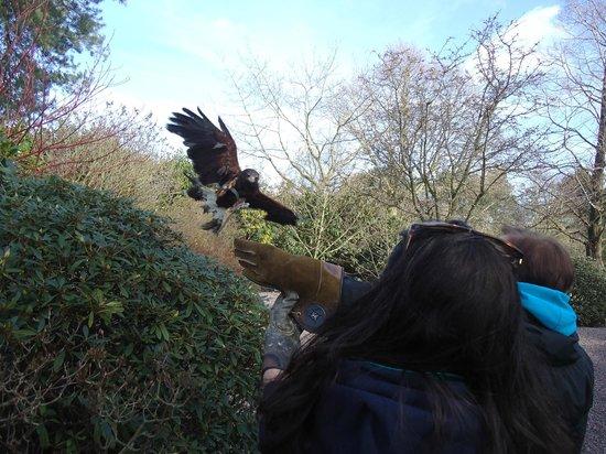 Stockley Farm Birds of Prey Centre: Lovely Gil