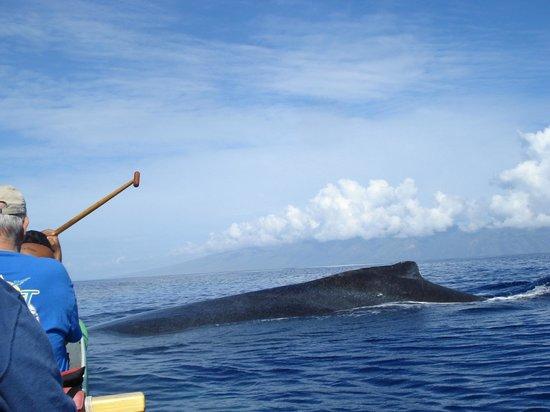 Maui Paddle Sports : Close encounter