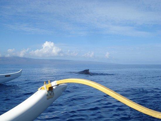 Maui Paddle Sports : Good-bye