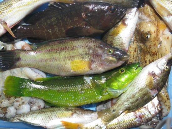 Camping Telis: pescato