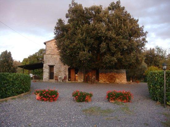 Antica Olivaia