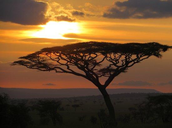 Access2Tanzania : Acacia tree on the Serengeti