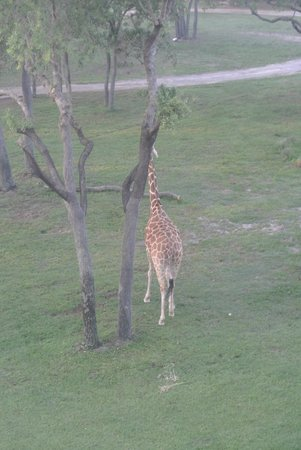 Disney's Animal Kingdom Lodge: view