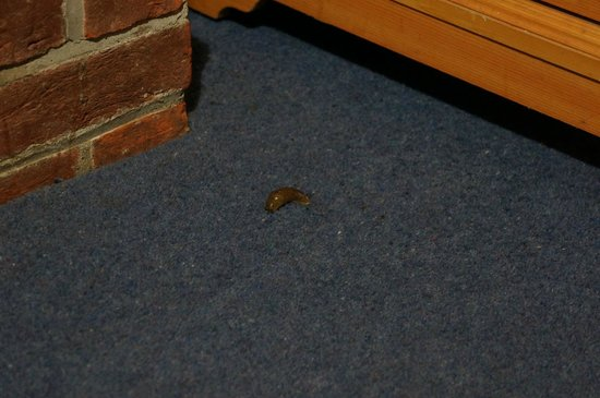 Heathrow Lodge : Leech crawling in our room!