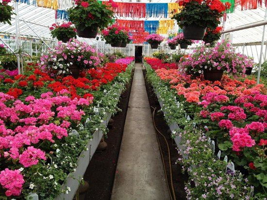 Rock Falls, IL : Greenhouse in full bloom