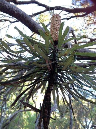 Bussells Bushland Cottages: Banksia