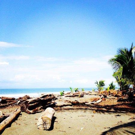 Cabinas Coloso Del Mar: The property´s beach