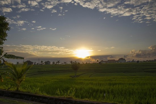 Nowa Bali - Private Tour: Sunrise over the rice fields