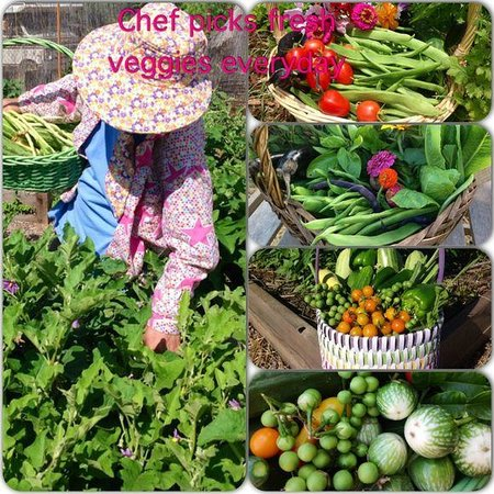 Supannee House of Thai: Supannee working in the garden