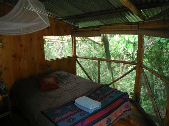 Casa Mariposa Hostel & Guesthouse: La vue de notre Jungle room !
