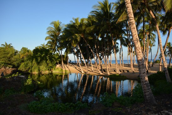 Fairmont Orchid, Hawaii: Pond