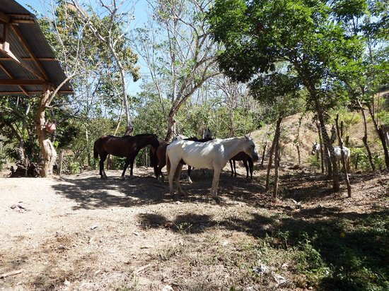Star Mountain Jungle Lodge: horses on the property