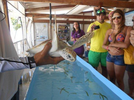 Posada Guaripete: Fundación para proteger las tortugas