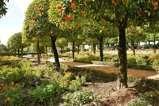 Alcazar de los Reyes Cristianos: Orange trees in February.