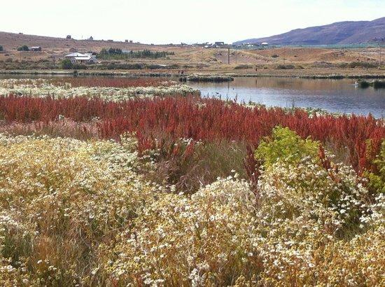 Laguna Nimez Reserve: Sinfonía de colores