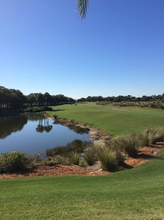 Villas of Grand Cypress : The golf course