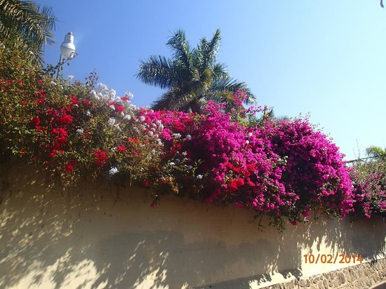 Casa del Sol: Flowers along one of Ajijic Streets
