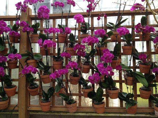 Atlanta Botanical Garden: Flowers
