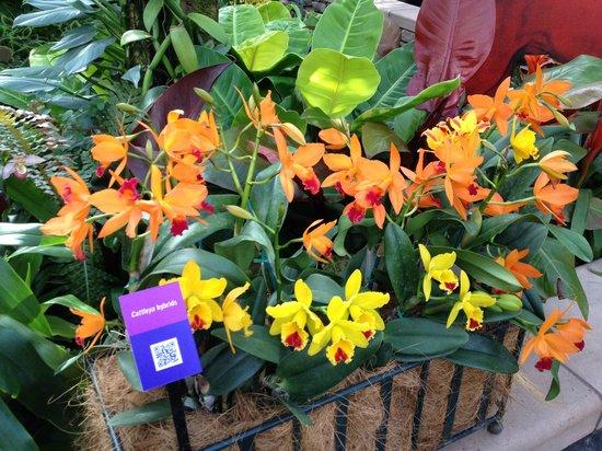 Atlanta Botanical Garden: More Flowers