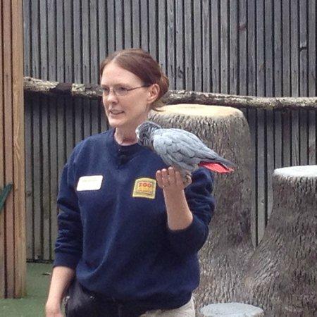 Zoo Atlanta: Great Bird Show