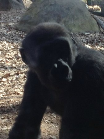 Zoo Atlanta: Who is watching who????
