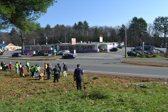 Brattleboro Outlet Center: Planting of daffodils across from Outlet Center