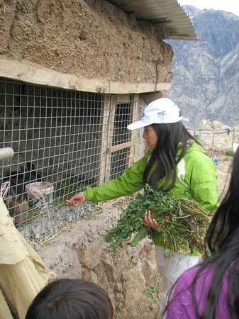 La Granja Del Colca: Animales en la granja