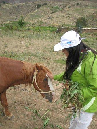 La Granja Del Colca: Pony en la Granja