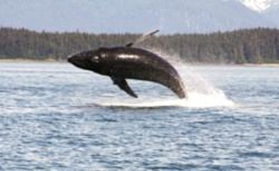 Pearson's Pond Luxury Inn and Adventure Spa : Flying Humpback
