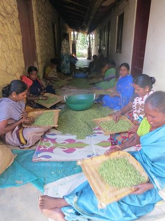 Kalarickal Heritage Bungalow: sorting the cardamom