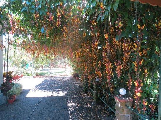 Kalarickal Heritage Bungalow: amazing flowering vine