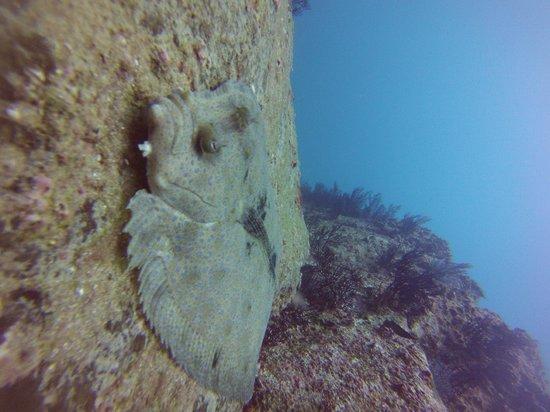 Dive Cabo : Flounder at Land's End
