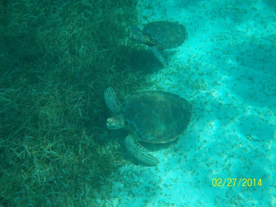 Searious Adventures: Sea Turtles!