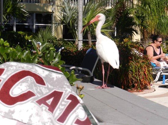 Best Western Key Ambassador Resort Inn: You'll see a few of these