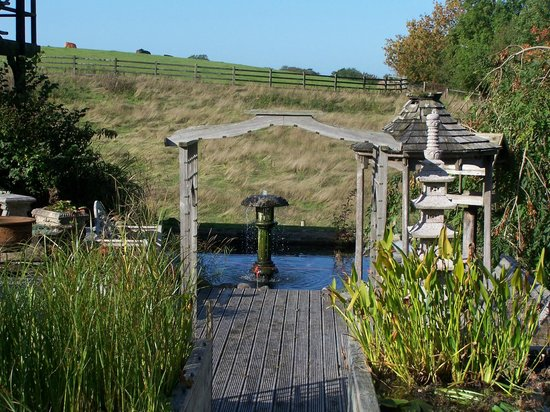 Lawcus Farm Guest House: Pond with japanese fish